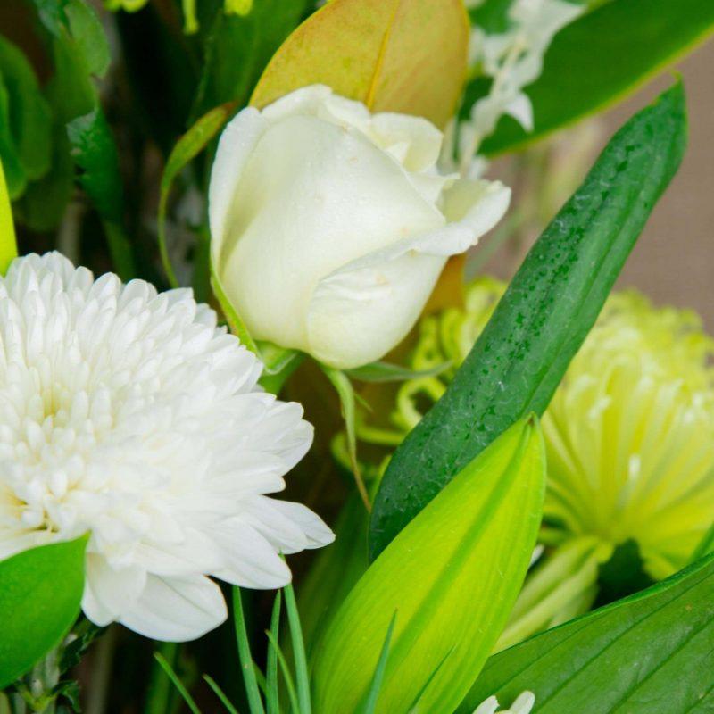 Sheppartonpotplants Julie