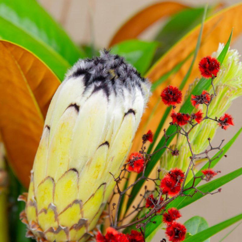 Sheppartongiftpacks Native Beauty