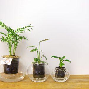 PotplantsShepparton