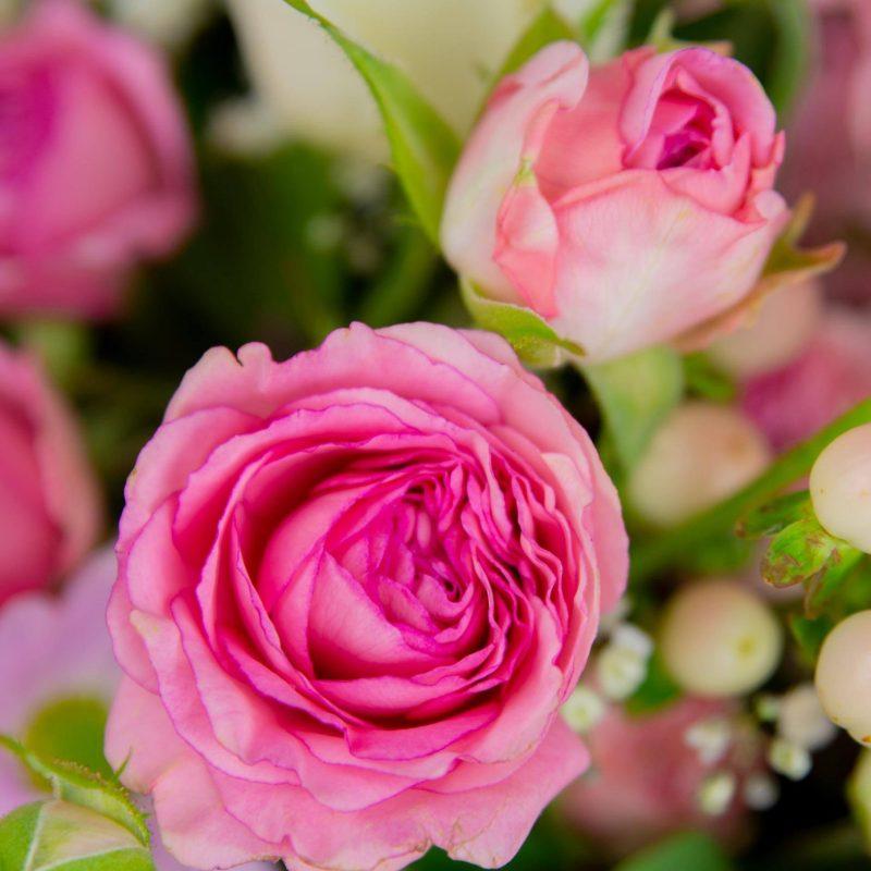 Flowers in Shepparton